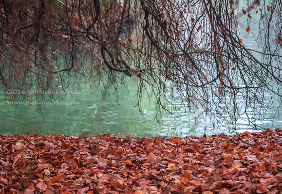 Autumn around the lake