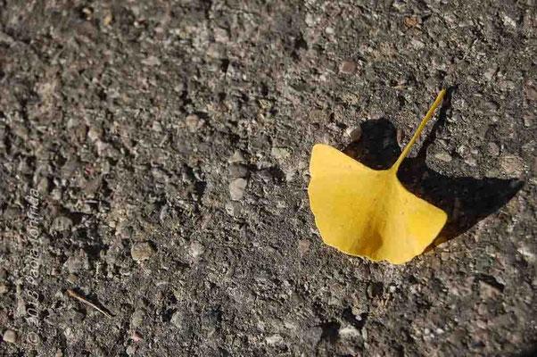 Foglia di Ginko Biloba in autunno