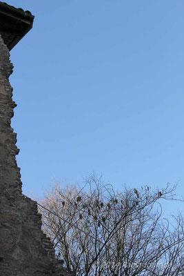 Mura di Porta San Donato - Bologna