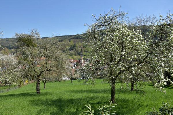Heiligkreuzsteinach, die Perle des vorderen Odenwaldes