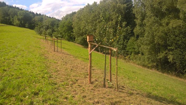 Jungbäume müssen auch gegen Weidetrieb geschützt werden