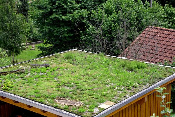 Der viele Regen lässt das Dach sattgrün leuchten