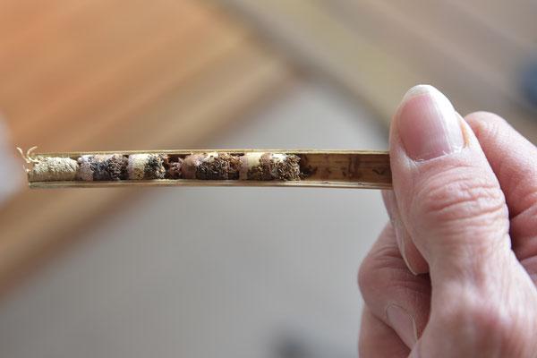 Linienbauten von Mauerbienen. Hier sind vier Kokons zu sehen