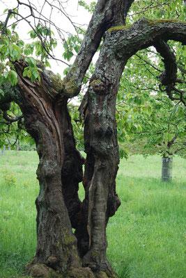 Eine Baumruine, die vielen Tieren einen Lebensraum bietet