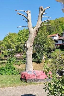 Immer öfter zu sehen, ein zu Tode sanierter Baum. Fügt man einem Baum solch riesige Wunde zu, dann wird er zum dauerhaften Sanierungsfall. Die Wunden faulen aus und der Baum wird instabil. Eine permanente Sicherheitsüberwachung ist hier notwendig.
