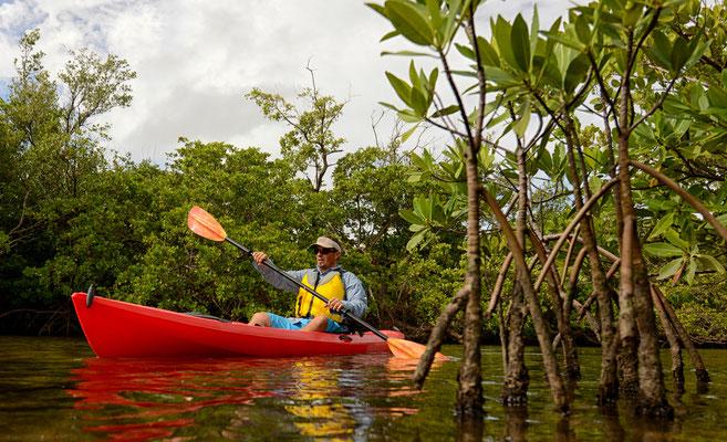 Kajak fahren in den Mangrovenwäldern.
