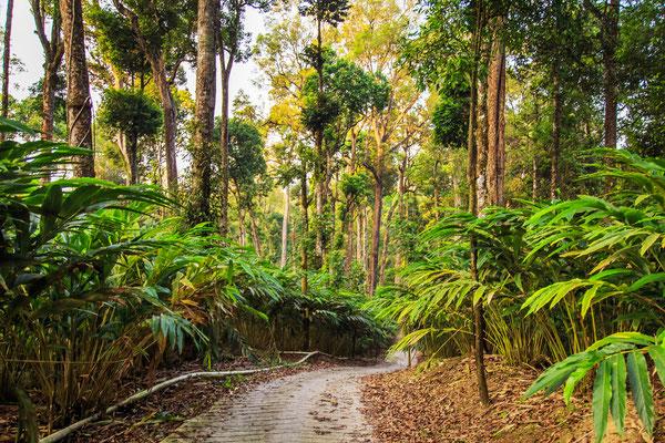 Die unberührten Regenwälder eignen sich besonders gut für naturbewusstes Trekking und   Ökotoursimus