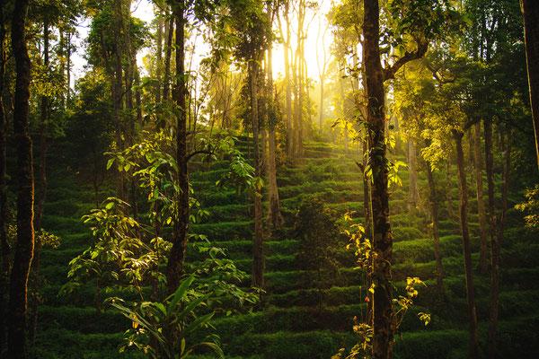 In den Cardamon Highlands kann man noch unberührte Natur genießen.