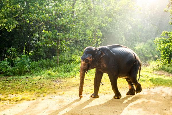 Erleben Sie Elefanten in artgerechter und natürlicher Umgebung.