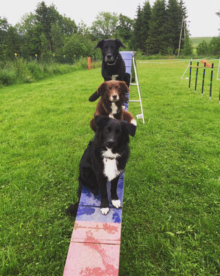 die Agility-Truppe