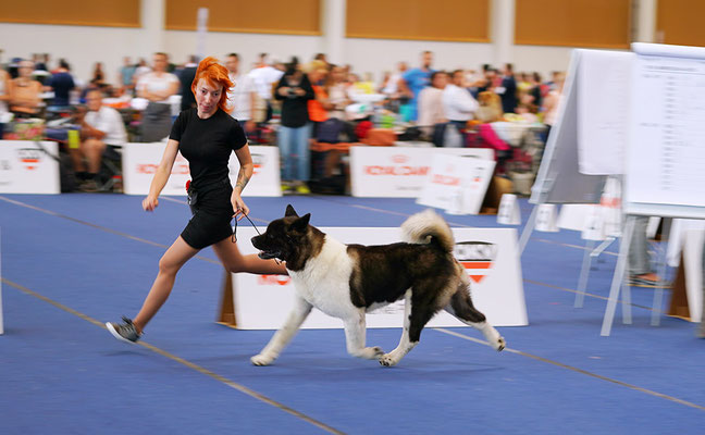 ALL FOR ALMIGHTY kennel AMERICAN AKITA ::: AUSTRIAN WINNER 2019 ::: AW2019 ::: AUSTRIA, WELS ::: EDS2019 ::: EURO DOG SHOW 2019 ::: VIDEO :::
