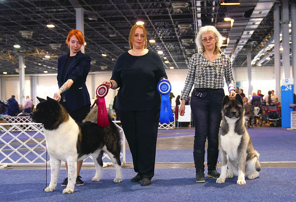 Американская акита All for ALMIGHTY American Akita kennel ::: puppies ::: #dogshow # worlddogshow #NDS #FCI_dogs #pedigree #akitabreeder #almightykennel #dogphoto #bestdogsphoto #IDS #nationaldogshow #internationaldogshow #interchampion #CIB #champion #al