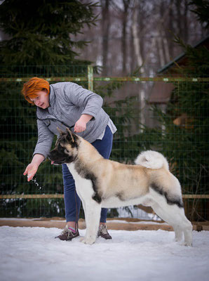 American Akita INDEVOR CENTER OF ATTENTION in ALL FOR ALMIGHTY kennel