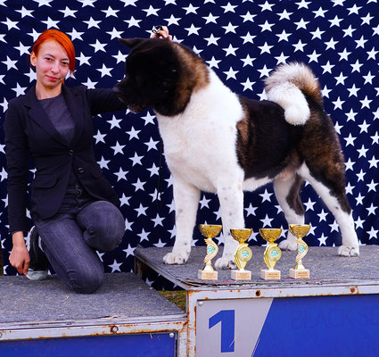 American Akita KEKS Американская акита #bestdog #akitakharkov #akitakharkiv #akitaharkiv #americanakitaukraine #akitaukraine #americanakitainukraine #bestpuppiesakita #puppiesakitaforsale #bloodchampions #puppyfromchampions #akitakennels #kennelkharkiv #b