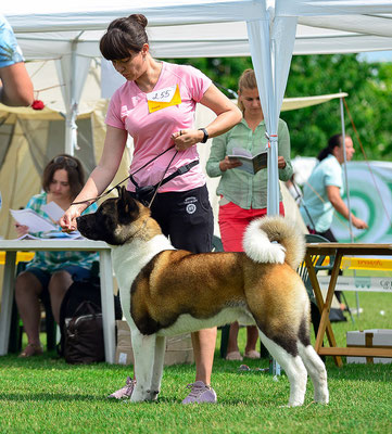 American Akita  ALL FOR ALMIGHTY BEFORE HEAVEN International Dog Show -  Dnepr, Ukraine