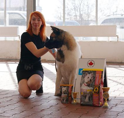 American Akita  SIBERIAN HUNTER DAISY-BEAUTY - Dog Show