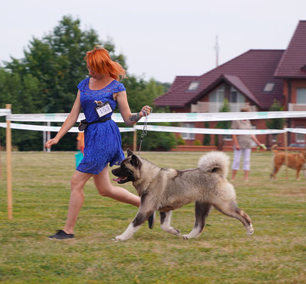 IDS Sumy, Ukraine   American Akita   AMFASHION PRINCESS LEIA - 2 J.CAC, J.BOB!!!   🇺🇦️🏆Junior Champion of Ukraine!🏆🇺🇦️