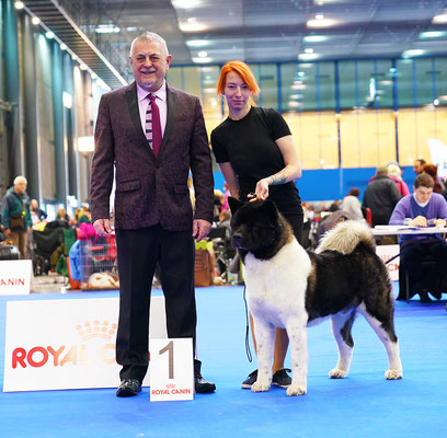 #FCI_dogs #pedigree #akita_breeder #almightykennel #dogphoto #bestdogsphoto #IDS #nationaldogshow #internationaldogshow #interchampion #CIB #champion #almightydog #cac #cacib