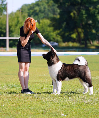 INTERNATIONAL DOG SHOW & NATIONAL DOG SHOW in KHARKIV. BIS JUNIOR 3 - AMERICAN AKITA 🔥ALL FOR ALMIGHTY DAZZLING QUEEN OF THE WIN !!!