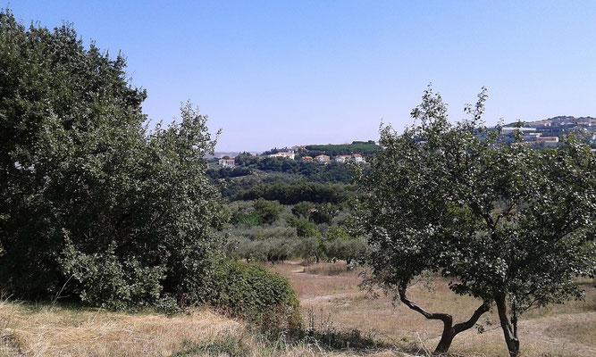 Il poggio collinare sul quale si trova il Convento dei Cappuccini di Larino; il centro abitato di Pian S. Leonardo è a destra, lungo i pendii del Montarone
