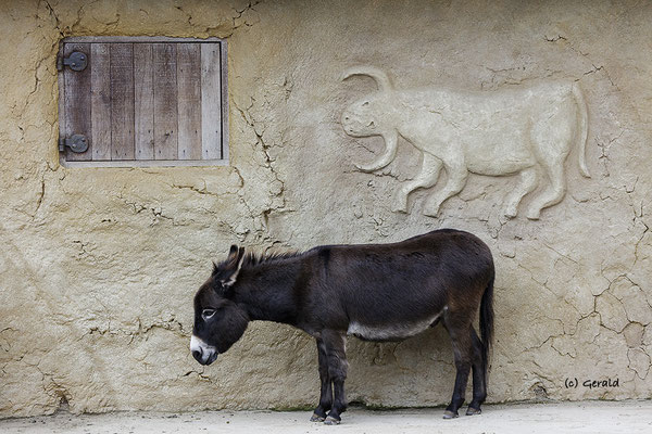 Donkey with wall ornament