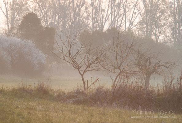Morgenstimmung in der Natur