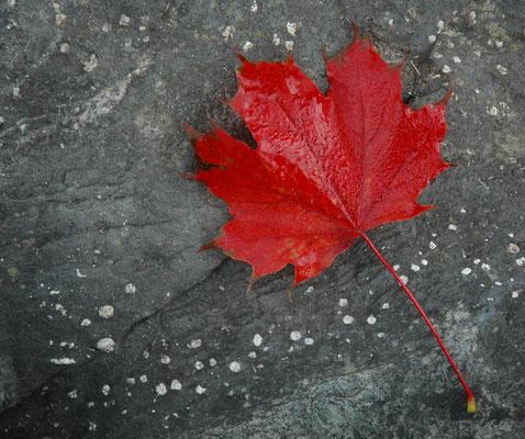Rotes Blatt auf Stein