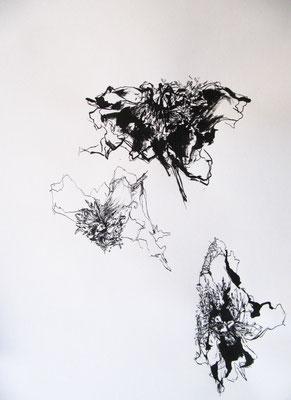 Paeonia, Tusche auf Papier, 42 x 29,5 cm, 2017