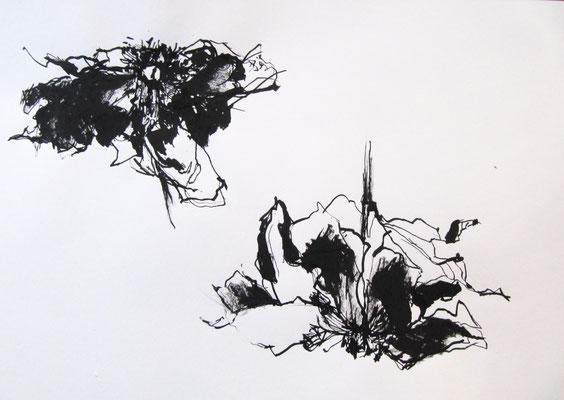 Paeonia II, Tusche auf Papier, 42 x 29,5 cm, 2017