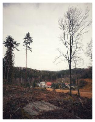 Borkenkäfer-Sturmschaden-Blick auf die Ottomühle