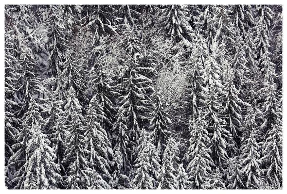 Winterwald am Fuß der Schrammsteine