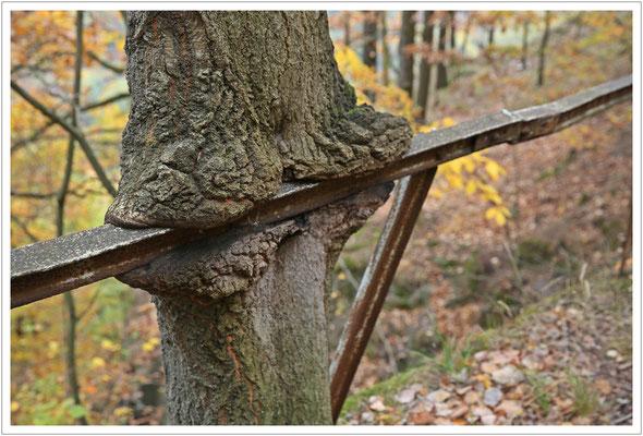 Holz umgarnt Metall