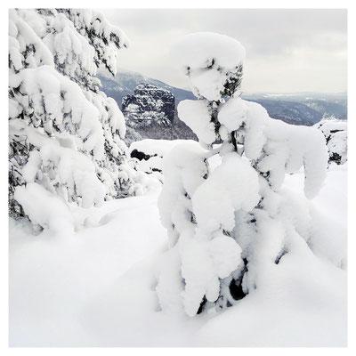 schneelastiges Bäumchen an der Breiten Kluft