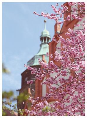 Frühling an der Stadtkirche St. Marien