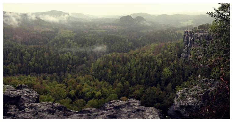 Regen trifft auf warmen Waldboden...