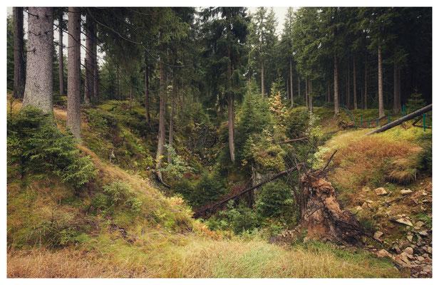 """Der Pingenbereich der Grube """"Edler Pelz"""" mit den beiden zusammentreffenden Zinnerzzonen."""