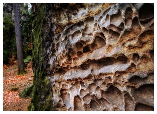 Sandsteinverwitterung am Sachsenstein