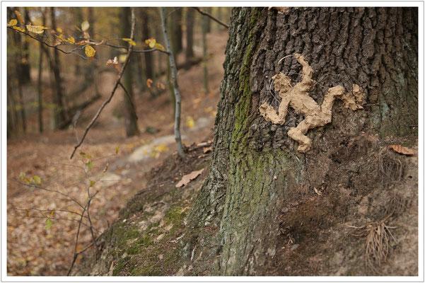 der hellbraune Lehmbaumfrausch - ein typischer Vertreter im Sandsteinbruchgebiet 😉