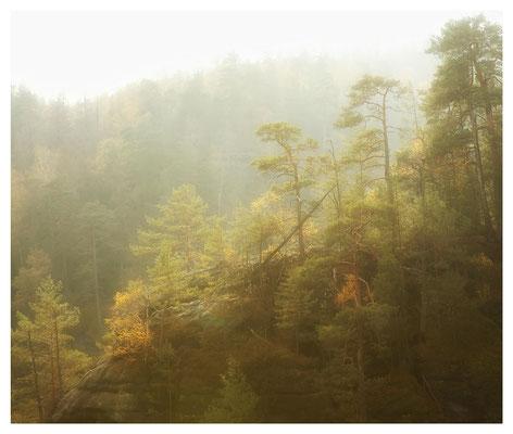 Waldriff in den Bärenfangwänden