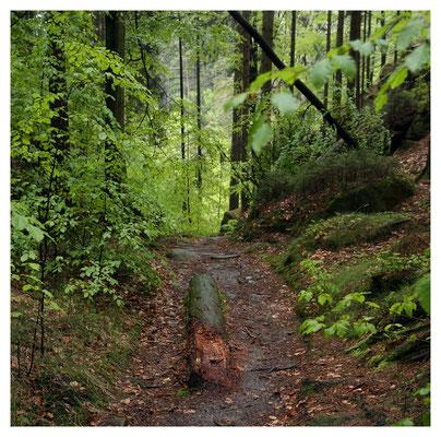come as you are - Wanderweg in Hohlfelds Graben