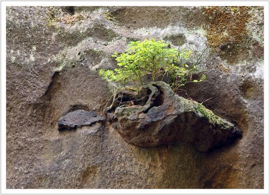 Die harte Eisenschwarte widersteht der Verwitterung, während der Sandstein ringsherum wegbröselt