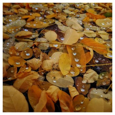 Herbst am Kirchbrunnen in Pirna