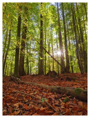 ...durch herrliche Buchenwälder entlang des Edersees.