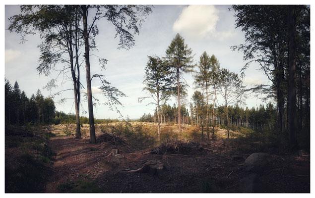 Waldschäden am Westhang des Tanzplan