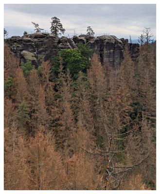 Waldschäden auch hier: der Borkenkäfer hat zugeschlagen