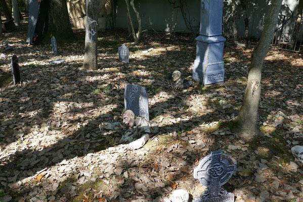 """Zoo Boo"" in Memphis - Halloween war nicht mehr weit"