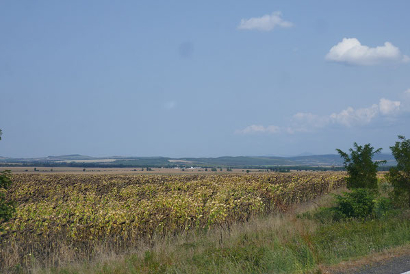 endlose Maisfelder
