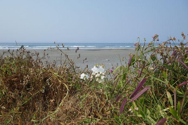 erste Eindrücke der kalifornischen Küste