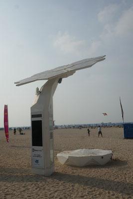 Solarpalme am Strand
