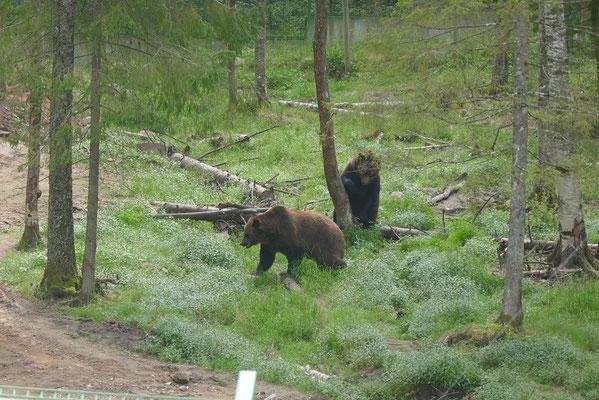 Wildtierpark Ligatne